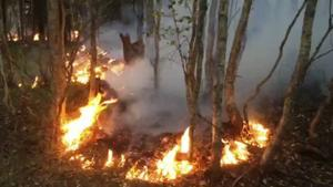 70 mil slang har rullats ut i skogarna kring Sala.