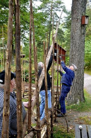 Stör ej. Gärdslena behöver vara riktigt långa för att räcka genom sju störpar. Roger Lind, Olle Widell och Nils-Ivar Andersson hjälps åt för att lägga den på plats.
