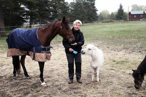 På Perssons gård i Älvkarleby finns tio hästar varav fyra tävlingstravhästar.