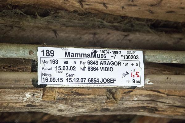 Inte bara ett nummer. Korna hos Sundbergs har namn.