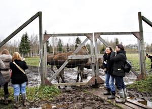 De portugisiska lärarna Patricia Marta och Maria Docastelo gillade gårdagens besök vid älgparken i Kybacka gård.