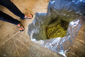Jemtehed & Brande beställer humle från USA. När humlen tillsätts under kokningen kommer också beskan.