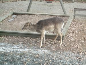 Fick syn på denna lilla besökaren utanför mitt köksfönster