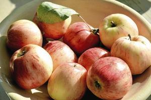 Allergifri. Maglemer är äpplet för allergiker att ta till sig. Det kan de flesta äppelallergiker äta.