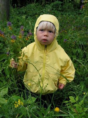 Lite regn stoppar inte Hanna från att plocka midsommarblomster.