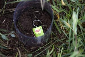 Tepåsförsöket går ut på att ta reda på hur snabbt en tepåse bryts ner i jorden.