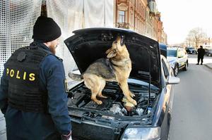 Yatzy letar narkotika i en bil. Arkivbild