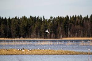 Lillsjön i Östersunds kommun.