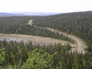 Skogen är inte i första hand en privatekonomisk resurs, skriver artikelförfattarna Thomas Tidholm och Viktor Säfve.