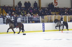 Cirka 400 personer hade samlats för att se islandshästar tölta inne i sporthallen.