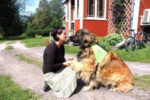 TEAM. Monica Sundberg och leonbergern Oskar går i vårdhundskola. Om slutprovet går som det ska kommer de tillsammans att jobba på Wesslandia i Karlholmsbruk.