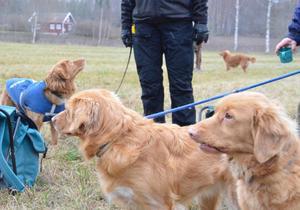 Hundarna var ivriga på att få arbeta och hade knappt ro att låta hussarna och mattarna ta en fikapaus.BILD: SAMUEL BORG