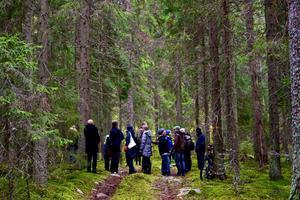 Fem skogsnaturvårdare i Dalarna ställer i dag frågor som de önskar offentligt svar på från Karl Hedin. Bland annat tar de fem upp skogen vid Trollputten i Ludvika, där det tidigare i november hölls en räddningsaktion.