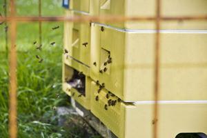 Surrande villor. De två bikuporna står innanför en gallerbur så att det inte går att komma för nära, och för att låta bina vara i fred. Kuporna har husets barn målat.