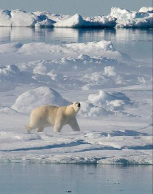 Vi måste lite på dem som har koll på klimatförändringar, skriver Holger Everitt.Foto: Jonathan Hayward/Scanpix