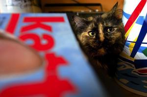 Flyttar snart. Paloma är en av de lyckliga katter som snart får ett nytt hem, i Laxsjön.
