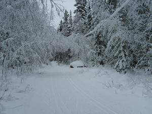 Tog en skidtur i det fina elljusspåret,lörd 16 jan.Ett par grader minus bara. Skogen var otroligt vacker med massor av snö.