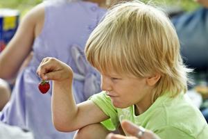 Sur jordgubbe? Lillebror Melvin Olsson hade gott om fika med sig på skolavslutningen på Sätra skola. Vad kan väl vara bättre än jordgubbar att sätta i sig en varm sommardag.