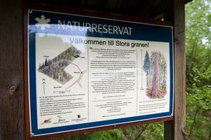 Fanns inte med på listorna i länsstyrelsens jätteträdsinventering som pubnlicerades trots att Stora Gran är skyddad av länsstyrelsens naturreservat