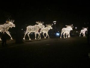 Ljusälgarna som finns i Stockholms city.