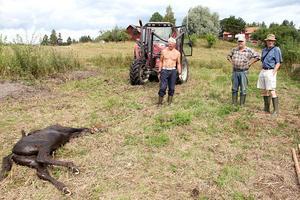 Fölets liv gick inte att rädda. Ägaren Olov Brunlöf och hans grannar hjälpte till att dra upp kroppen ur kärret.