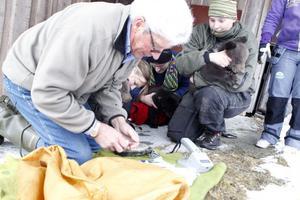 Djurparkens tre unga krabater chipmärks, vägs och könsbestäms.