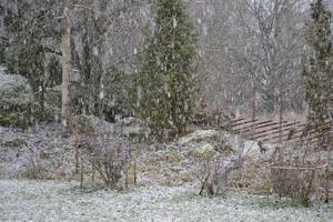 Om detta var den enda snö vi skulle få i vinter var det bra att spara den på bild!!