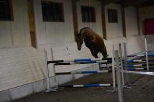 Många hästar fick visa upp sig under torsdagskvällen och vissa imponerade mer än andra.