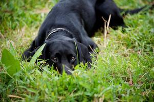 Det finns i dag cirka 881 000 hundar i Sverige.Foto Annika af Klercker