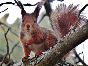Den försvann som en blixt upp i trädet när den fick syn på mig, men kunde sedan inte låta bli och stanna till och kasta en nyfiken blick.