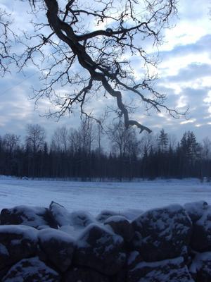 Riktigt kall vinter med ljusnande eftermiddagar har februari månadbjudit på hittills i år.