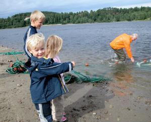För de yngre barnen är det alltid lika spännande när de stora fiskarna får vattnet att koka i noten. En del vägde nog lika mycket som lille Albin som fanns på stranden på tisdagen.