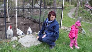 Hönsgård. Hos Annette Johansson finns för närvarande en tupp, sex hönor och åtta kycklingar. Dagbarnet Minya Öryd, tre år, talar om att tuppen minsann inte tycker om bananer.