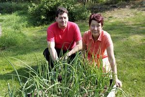 Flavio Mancini och Gertrud Edström odlar många olika sorters lök.