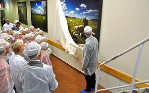 Magnus Johansson, vd för Coops inköpsorganisation Sikab, avtäcker den tredje tavlan som Grådö mejeri fick i 60-årspresent. Foto: Pär Sönnert/DT