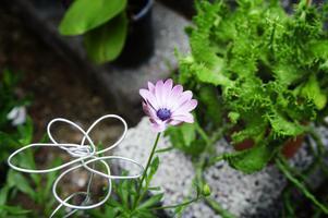 Omtanke. Varje växt på Bleke Blommor har tillägnats lite mer tid eftersom man vattnat och gjort allt själv, utan moderniteter.