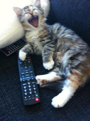 Tydligen så missade man något som va riktigt kul på TV:n. Men jag tyckte Freja va betydligt roligare.