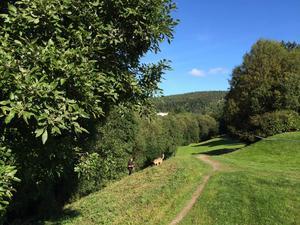 En tonåring är misstänkt för mord efter att en död kvinna hittats i ett grönområde vid Bergsgatan.