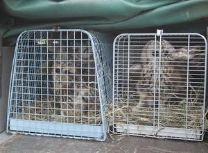 Bilder från husrannsakan hon Hudiksvallsbon 2010 då flera hundra vilda fåglar hittades i burar.
