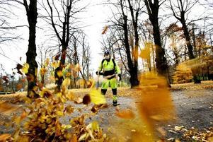 komposteras. Kennet Andersson från Markbyggarna håller på att blåsa ihop löven för att de sedan ska kunna köras iväg till komposten.