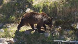 Anders Blomqvist, vd på Grönklittsgruppen, bekräftade under fredagen att ytterligare en björn befann sig i hägnet när attacken ägde rum.