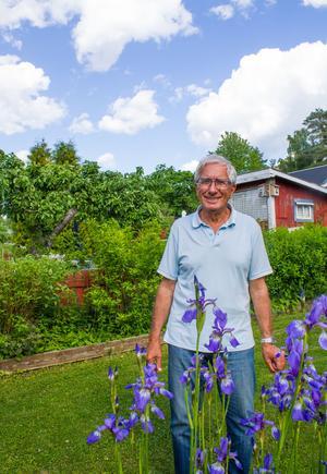 Augusto Mulazzani i sitt sommarparadis. Irisen blommar vackert  så här en dryg vecka före midsommar.