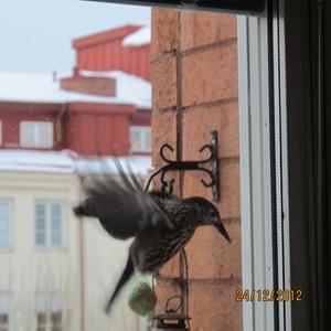 Igor har landat på Bogården.