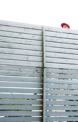 Emil Larsson balanserar på toppen av en stege med penseln i hand, men för säkerhetskull står mamma Linda nedanför med ett stadigt grepp om den.