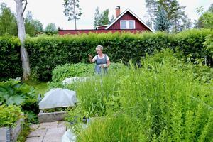 Laila Westlings frodiga trädgård, innanför en syrenhäck på den gamla villatomten i Ulvkälla, är magnifik: Fruktträd, kryddor, bär, ärtväxter, kålväxter, jordärtskocka och mycket annat.  Kålen växer i säckar efter att kålmalen smaskat i sig hela skörden de senaste åren.