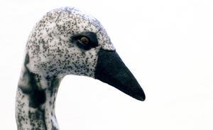 Maria Contollessa hanterar nakenraku med stor finess, inte minst i ett antal fåglar
