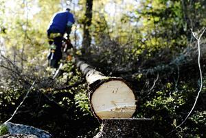 Skribenterna menar att skötsamma skogsägare riskerar att bli