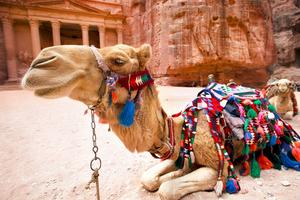 En kameltur under solen?