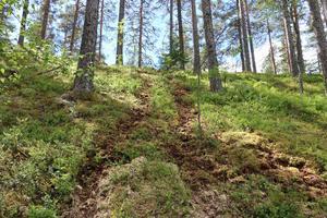 Spår av fyrhjulingar klättrar upp och ner i den kuperade terrängen.