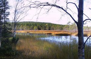 Bodmyran i norra Gnarp, prioriterad för att bli ett naturreservat. I Gnarp finns sedan tidigare naturreservat norr och söder om Sörfjärden samt ön Gran. Även mellan Norrfjärden och Dyråsand är ett naturreservat på gång.